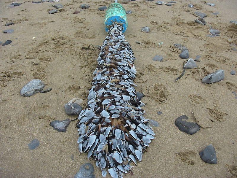 Seaweed and shell 2