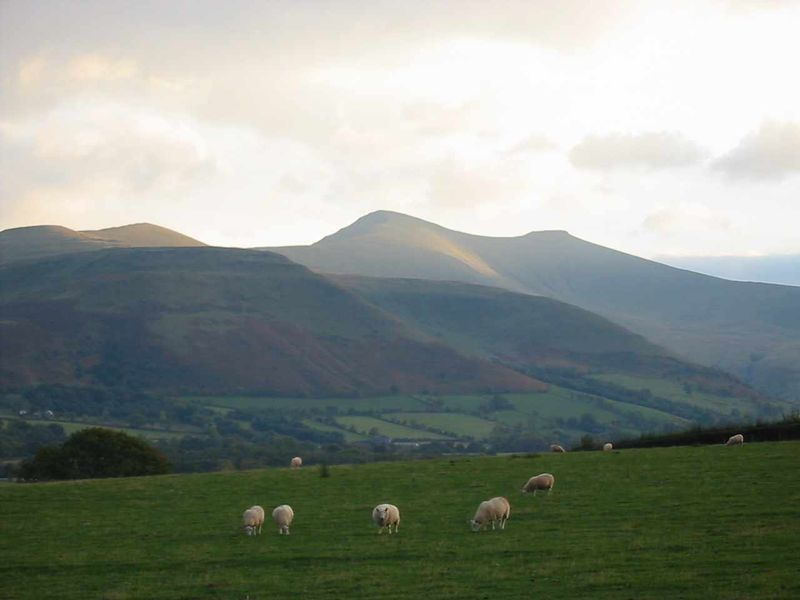 Sheep grazing and mountain